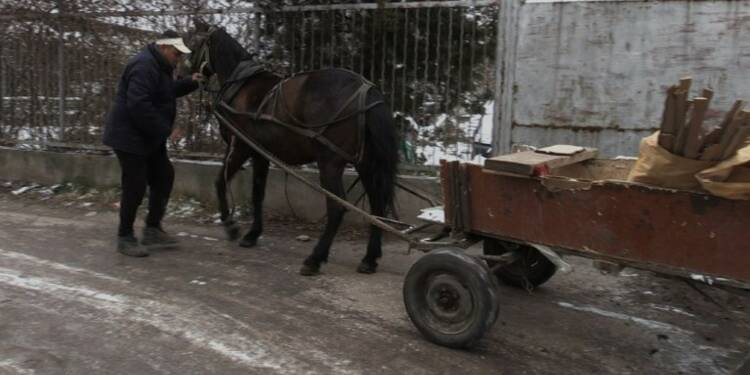 Les charrettes ne sont plus le dada de Sofia