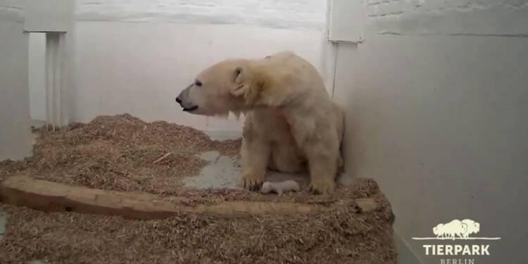 Le bébé ours polaire de Berlin a ouvert les yeux