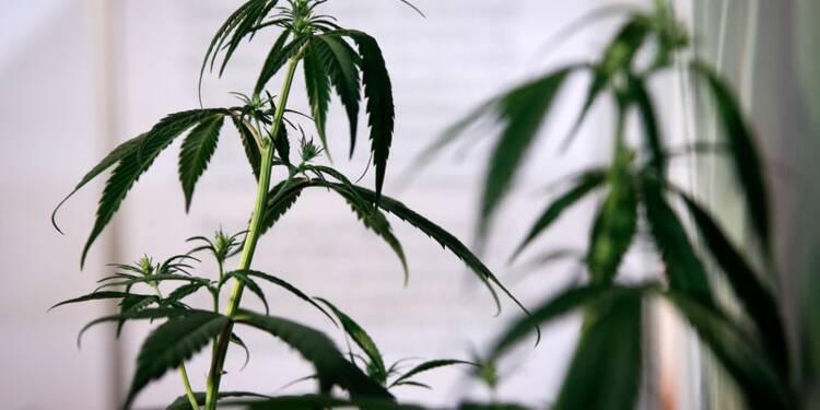 Le cannabis, un secteur en pleine ébullition !
