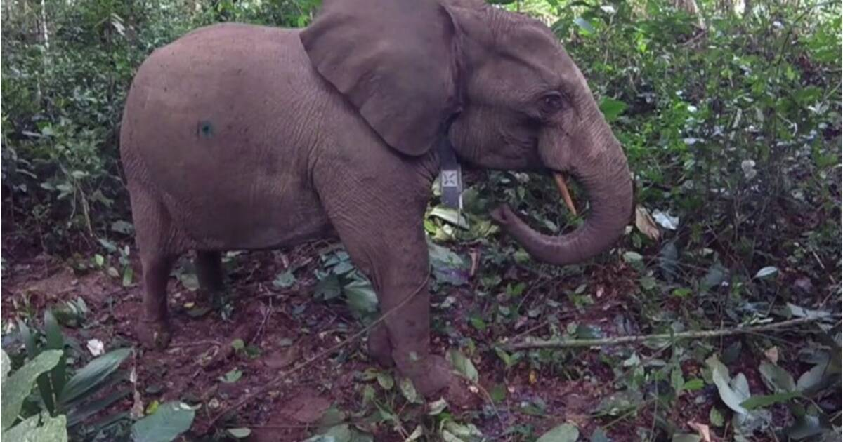 ovni elephant