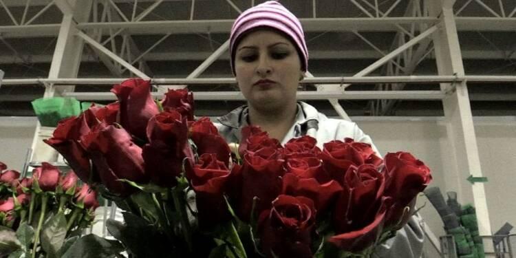 Colombie: des chômeurs au travail grâce à la Saint-Valentin