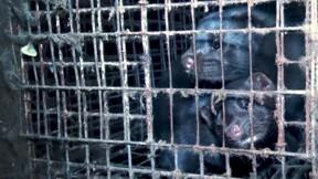 L214 : une vidéo dénonce l'enfer des élevages de fourrure