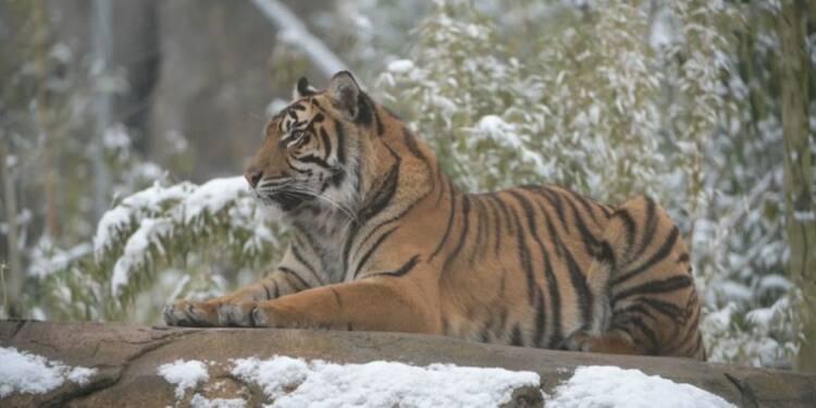 La neige fait le bonheur des animaux du zoo de Chester