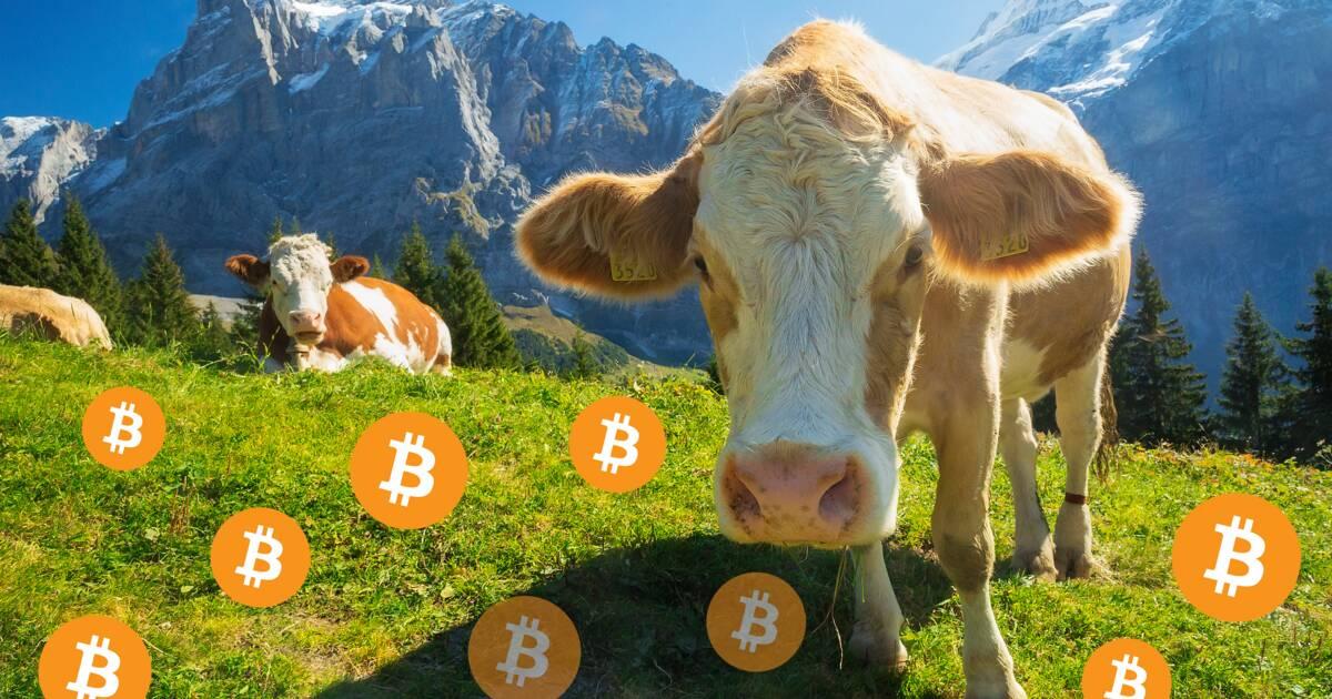 Comment la Suisse est devenue la première crypto-nation
