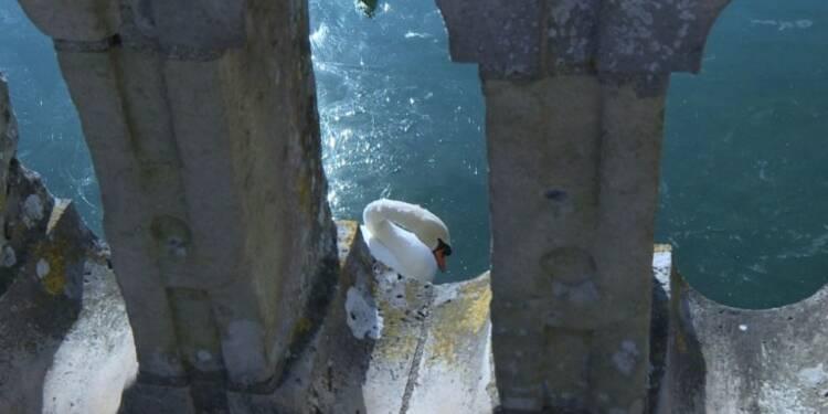 Fontainebleau: les bassins du château transformés en patinoire