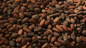 Les cours du cacao s'envolent… et il est encore temps d'en profiter!