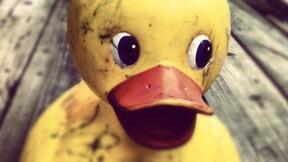 Alerte au canard de bain !