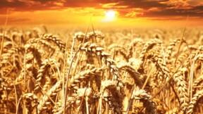 Blé, maïs, produits laitiers... les prix flambent !