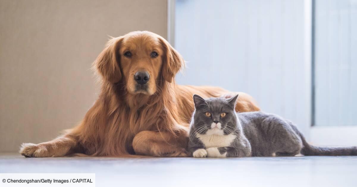 Chien Ou Chat Quel Animal De Compagnie Vous Coûte Le Plus