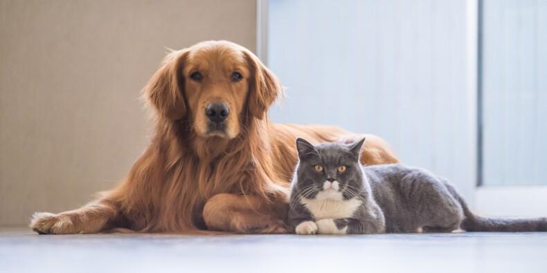 Chien ou chat : quel animal de compagnie vous coûte le plus cher?