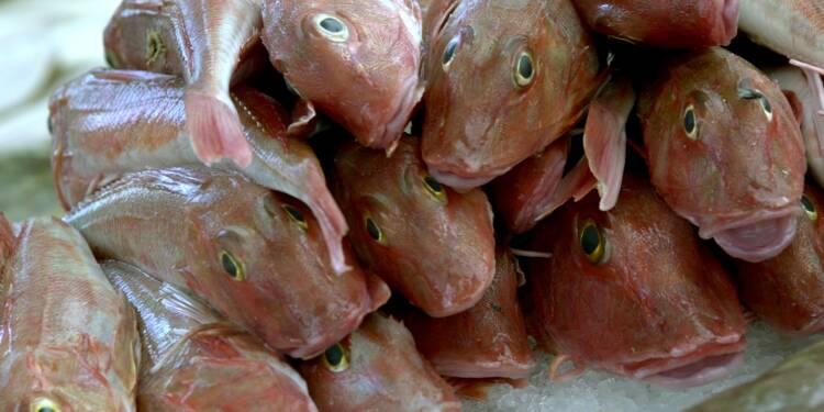 Alimentation : les vendeurs de poissons épinglés pour fraude