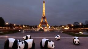 WWF France : la Cour des comptes déplore un manque de transparence sur l'emploi des fonds