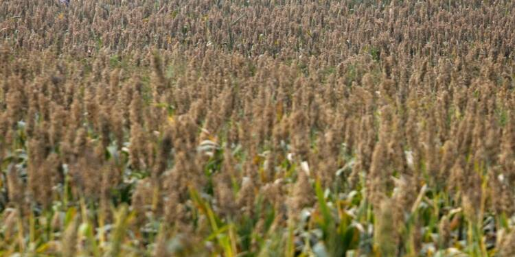 La Chine a clos son enquête sur le sorgho importé des USA