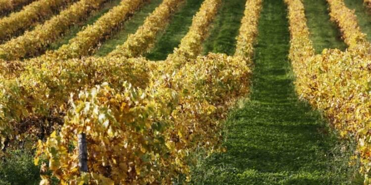 Le vin australien de Pernod Ricard bloqué dans les ports chinois