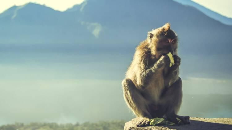 Le chimpanzé et la banane, le drame de la culture d'entreprise