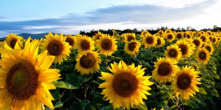 Le conseil Bourse du jour : Agrogeneration, un potentiel explosif !