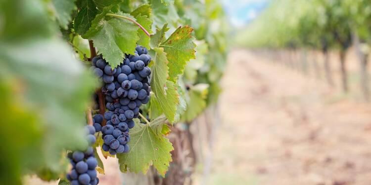Bordeaux : 10 châteaux viticoles saisis par la justice