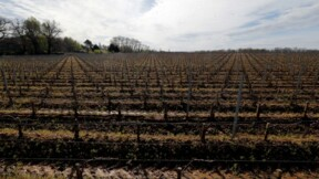 2.000 hectares de vignes touchés par la grêle dans le Bordelais
