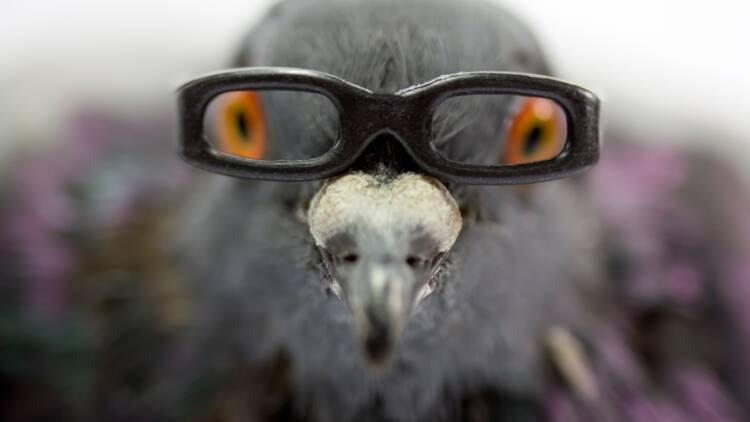 Chine : des drones-pigeons pour surveiller la population