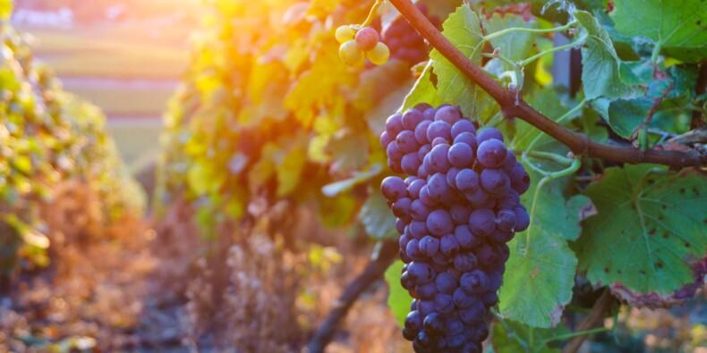 Le vin bleu désormais commercialisé en France