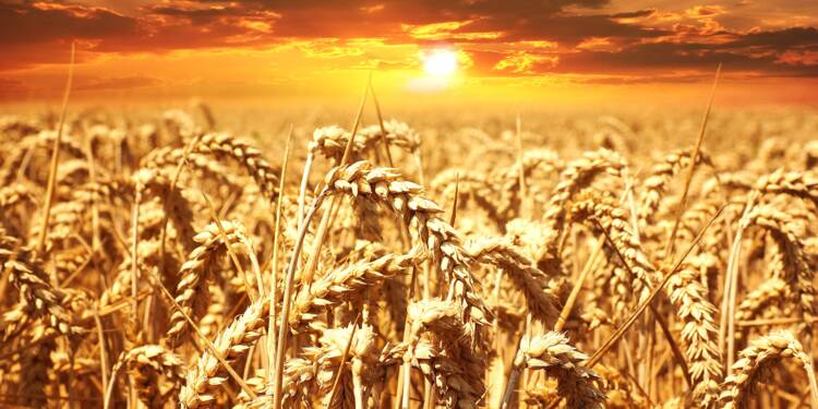Les prix du blé, du maïs et du soja plombés par des éclaircies