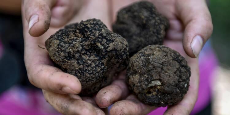 En Albanie, la guerre de la truffe