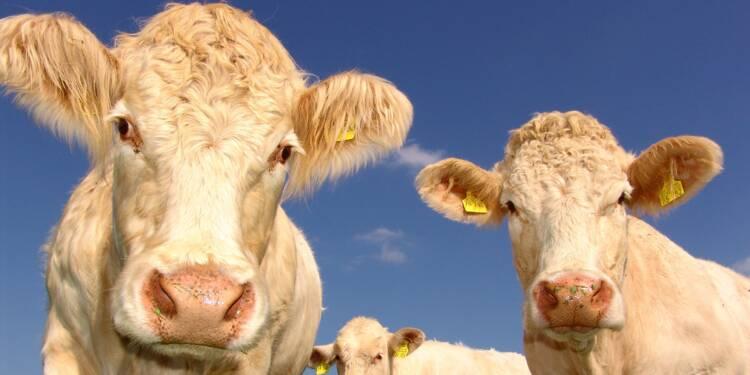Guerre commerciale : devenus hors de prix, le boeuf et le porc américains souffrent déjà!