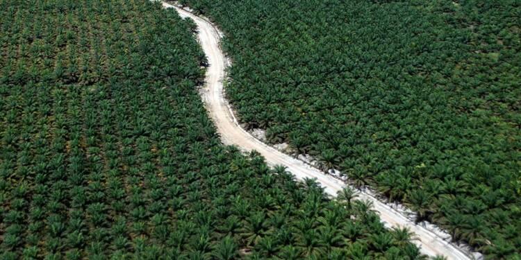 L'Indonésie conditionne l'achat d'avions à l'huile de palme