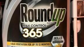 Glyphosate : les plaintes contre Monsanto se multiplient!