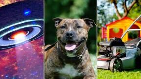 Un maire réglemente la longueur des laisses pour chiens. Découvrez 9 arrêtés municipaux originaux