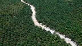 Nestlé va surveiller du ciel les plantations d'huile de palme