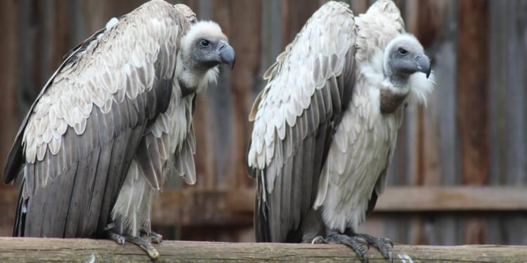 Comment le patron de Casino tente de protéger son entreprise des vautours de la finance