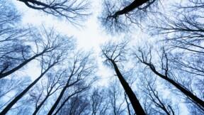 Immobilier : les arbres ne montent pas jusqu'au ciel ... les prix, non plus !