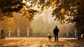 Le montant hallucinant de l'amende infligée contre les déjections canines