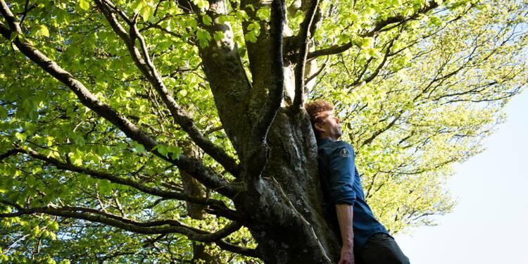 Managers, et si vous organisiez un séminaire en pleine forêt ?