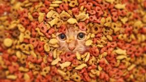 Le business en or de la croquette pour chats