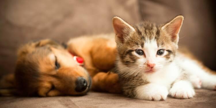 Cette start-up américaine propose de louer des chiots et des chatons à la journée