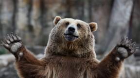 Débat : A-t-on bien fait de réintroduire l'ours dans les Pyrénées ?