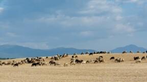 Corse : Anticor dénonce des détournements massifs de subventions agricoles