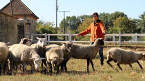 Devenez un leader grâce aux moutons