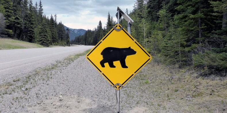 Après les ours et les éléphants, protégeons les punaises de lit