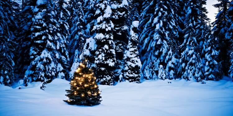 Jeter son sapin de Noël en forêt peut coûter cher