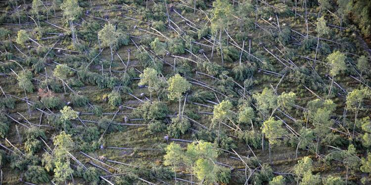 Pourquoi l'Office National des Forêts est au bord de la faillite