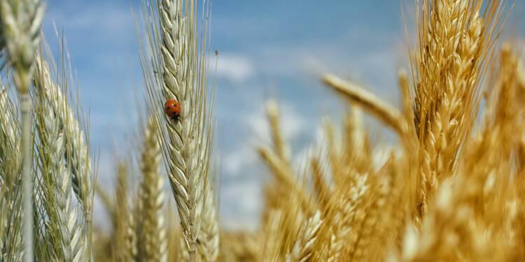 Céréales : les mauvaises conditions météo font bondir les prix du blé, du maïs et du soja