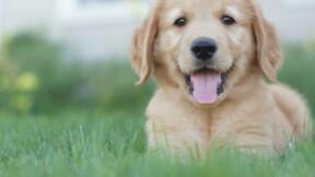 """200 chiens vendus à un """"élevage-usine"""" dans la Marne"""
