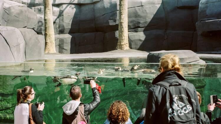 L'ex-zoo de Vincennes pourrait devenir un gouffre pour le contribuable