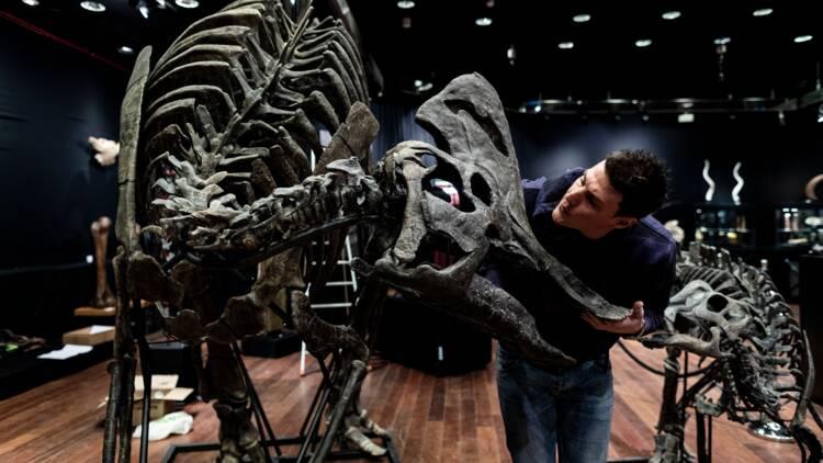 Un couple de dinosaures à vendre pour près d'un million d'euros