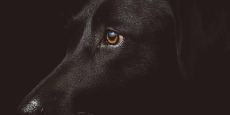 La chronique de David Abiker : mon coach... c'était mon chien