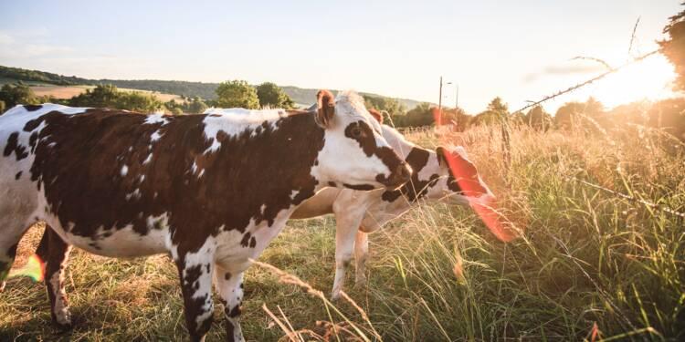 Champs électromagnétiques : des éleveurs attaquent l'État après la mort suspecte de leur bétail