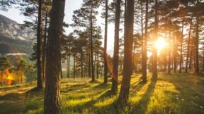 Redressement fiscal pour l'héritier Bich qui avait acheté une forêt bretonne